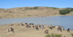 Giacche Verdi Bronte Escursioni Cavalli
