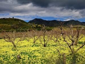 Giacche Verdi Bronte Riserva Biosfera UNESCO 6